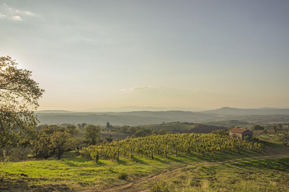 10-Working-Farm-Azienda-Agricola-Casale-Val-delle-Vigne-Scansano-Maremma-Tuscany-For-sale-farmhouses-country-homes-in-Italy-Antonio-Russo-Real-Estate.jpg