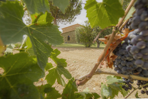1-Morellino-di-Scansano-Wine-production-Farmhouse-Azienda-Vinicola-Casale-Val-delle-Vigne-Scansano-Maremma-Tuscany-For-sale-country-homes-in-Italy-Antonio-Russo-Real-Estate.jpg