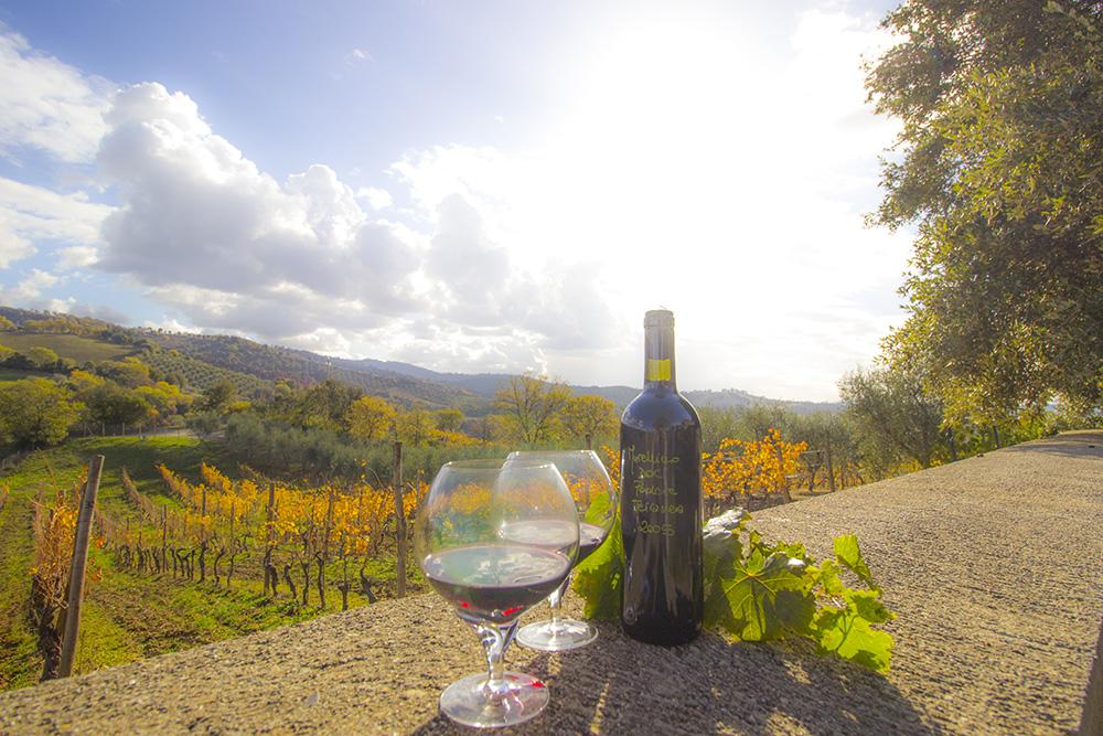 1-Wine-production-Working-Farm-Azienda-Vinicola-Casale-Val-delle-Vigne-Scansano-Maremma-Tuscany-For-sale-farmhouses-in-Italy-Antonio-Russo-Real-Estate.jpg