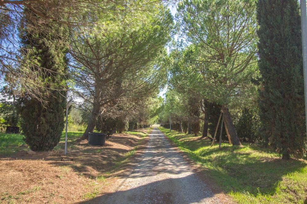 1-Maremma-Working-Farm-Grosseto-Castiglione-della-Pescaia-Tuscany-For-sale-Agriturismo-Antonio-Russo-Real-Estate-Italy.jpg