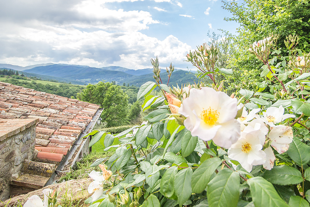 11-For-sale-unique-holiday-hamlet-Italy-Antonio-Russo-Real-Estate-Borgo-Country-Resort-Umbria-Accommodation-Facility.jpg