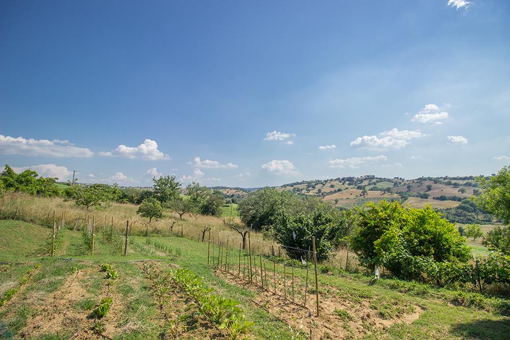 10-Casale-Il-Podere-esterno-Farm-Scansano-Maremma-Tuscany-For-sale-farmhouses-country-homes-in-Italy-Antonio-Russo-Real-Estate.jpg