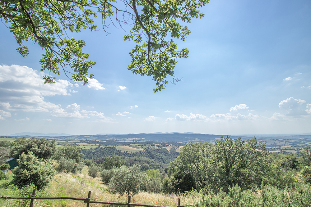18-Property-Il-Troscione-Organic-Working-Farm-Scansano-Tuscany-For-sale-holiday-farm-Antonio-Russo-Real-Estate-Italy.jpg