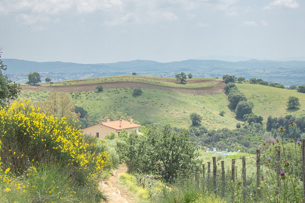 38-Farmhouse-Poggio-al-Sole-Organic-Working-Farm-Campagnatico-Tuscany-For-sale-holiday-farm-Antonio-Russo-Real-Estate-Italy.jpg
