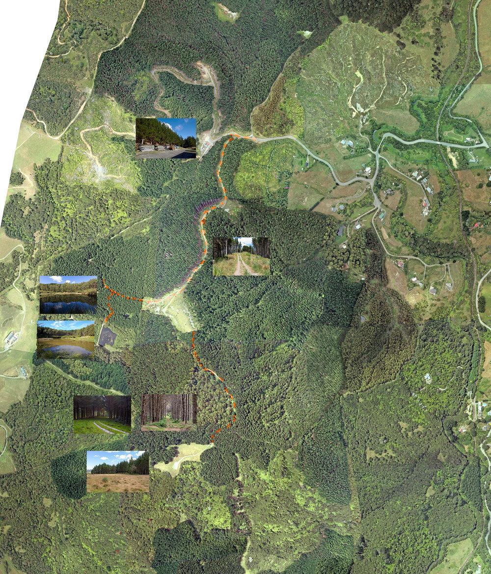 Tahekeroa Forest Location Makarua