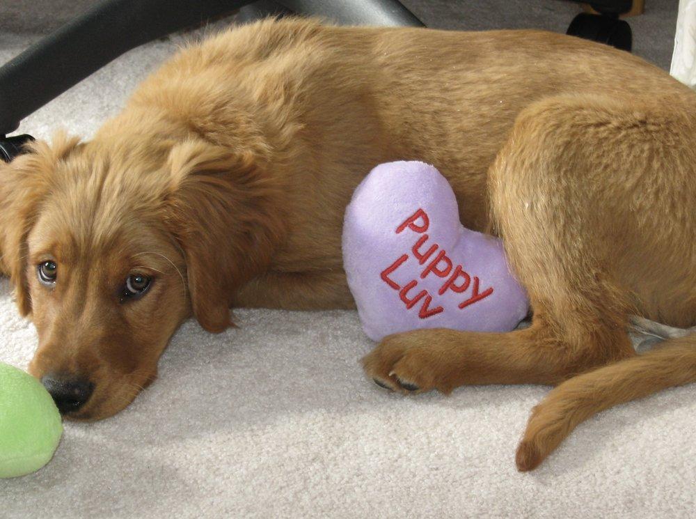 Copper's first Valentine's Day