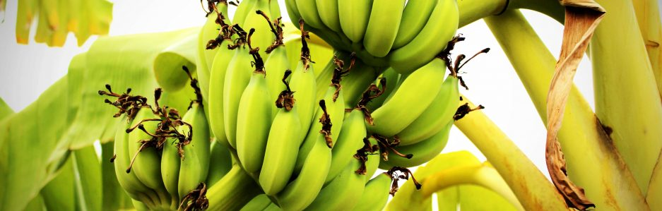 Plantains & Palm Trees - A Blog by Lindsay GaryBlack Culture. Black History. Globally.