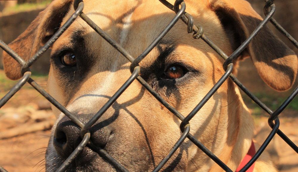 Shelter Dog 2.jpg