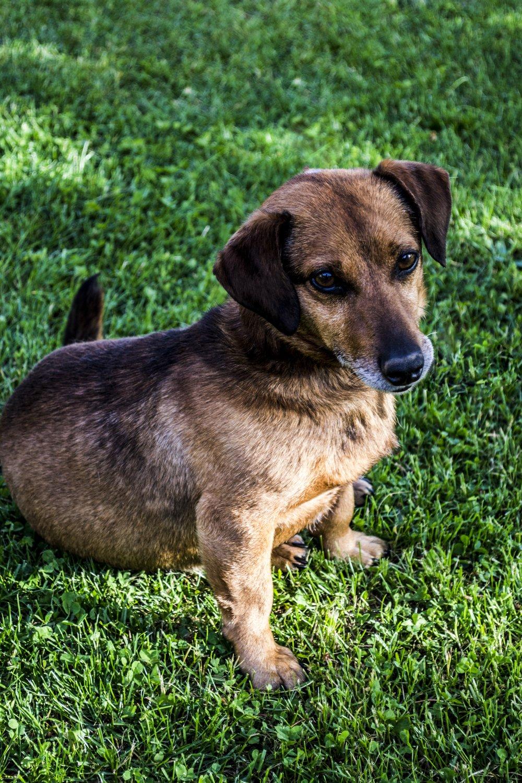 Senior Dog Photo 3.jpg