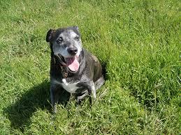 Senior Dog Giving Tuesday 8.jpg