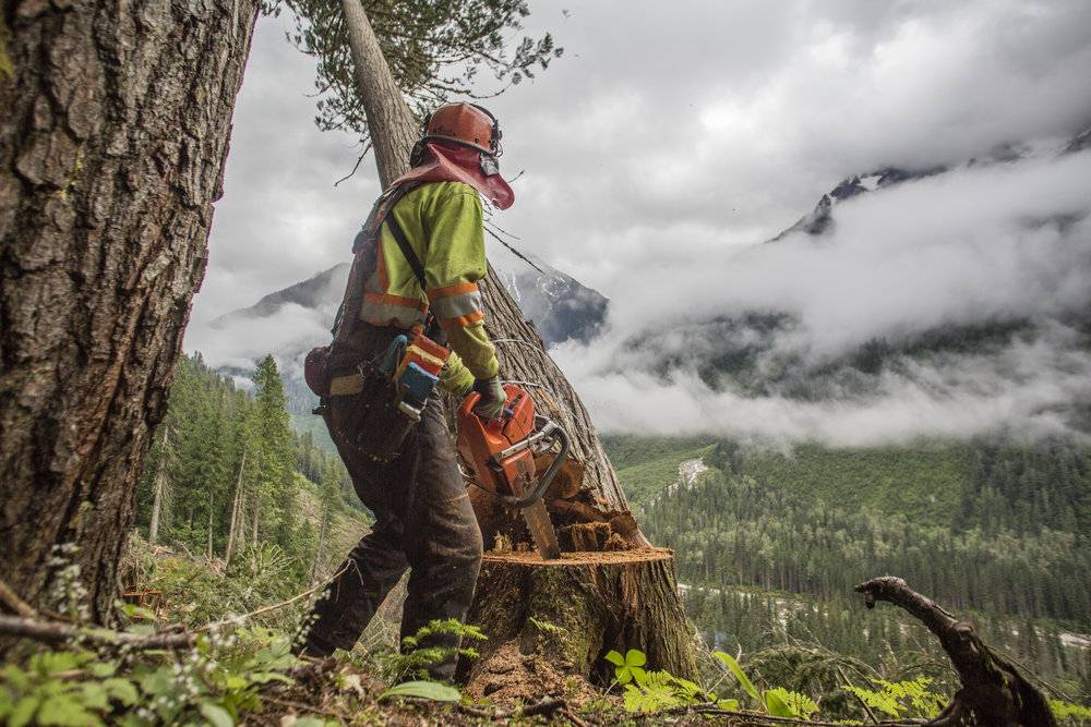 Document Activities - from logging and its impact on mountain caribou and the globally unique ecosystem they call home.