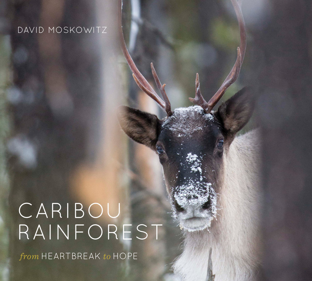 """Purchase the Book - The story of this iconic animal and stunning landscape provides an example of shifting conservation challenges and tactics in the twenty-first century. Mountain caribou have been identified as an """"umbrella species"""" by conservationists, meaning that protecting their habitat also helps preserve many other species who depend on the same ecosystem.More information →"""