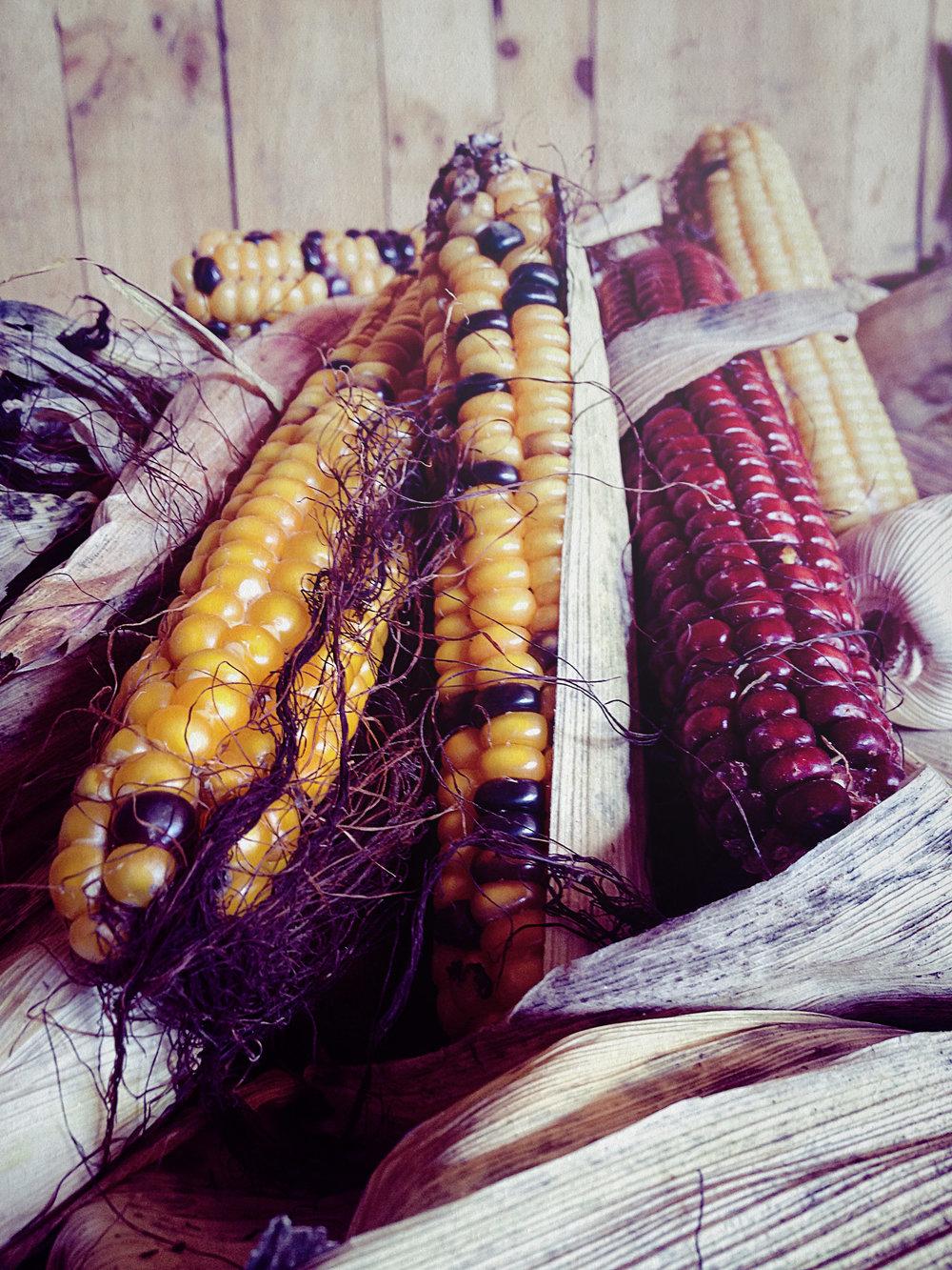 Ecologico maiz