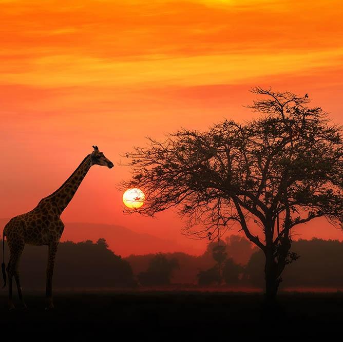 Explore Africa On a Volunteer Trip - EAGLE CREEK THE TRAVEL HUB