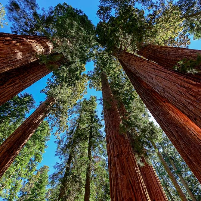Beneath The Shadows Of The Past: Sequoia National Park - THE TRAVEL HUB- EAGLE CREEK