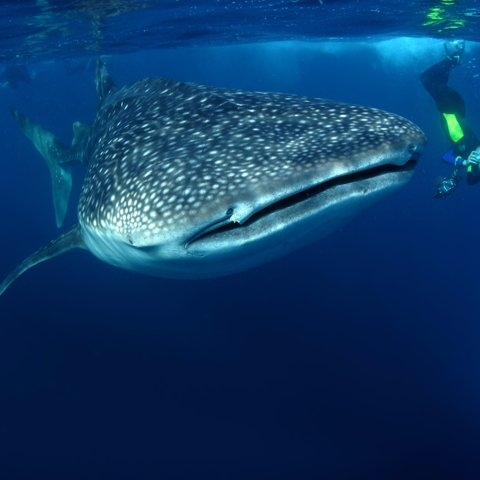6 Vacations You Should Be Taking If You're Obsessed With Shark Week - BUSINESS INSIDER