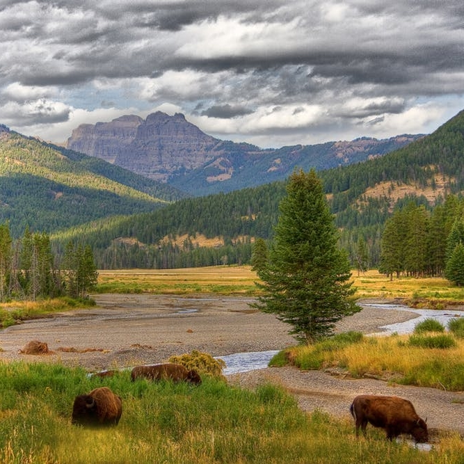 Born to Be Wild: The Ultimate Guide to Visiting Yellowstone Year-Round - BRIT + CO: Although seasoned travelers may complain about the crowds, there's a reason that Yellowstone is so famous.(1 September 2018)