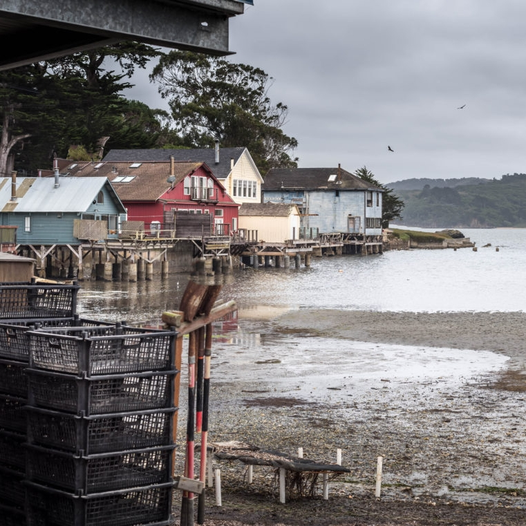 Local Flavor: Your Guide to the Oyster Farms Outside San Francisco - MVC: From the salt marshes of Tomales Bay to the Pacific coastline of Hog Island, here are the best oyster farms to visit on your day trip in Northern California. After all, why go on a wine tour of Napa Valley when you can shuck shellfish along the coast of West Marin instead?(25 October 2018)