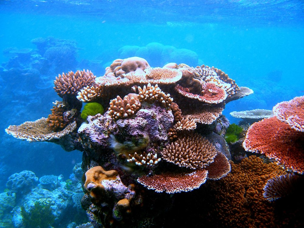 Great_Barrier_Reef_Marine_Park_image.jpg
