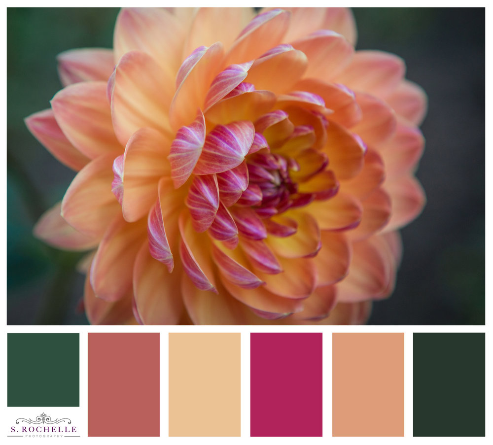 Dahlia Detail S Rochelle Photography 20170902IMG_9175_ColorPalatte.jpg