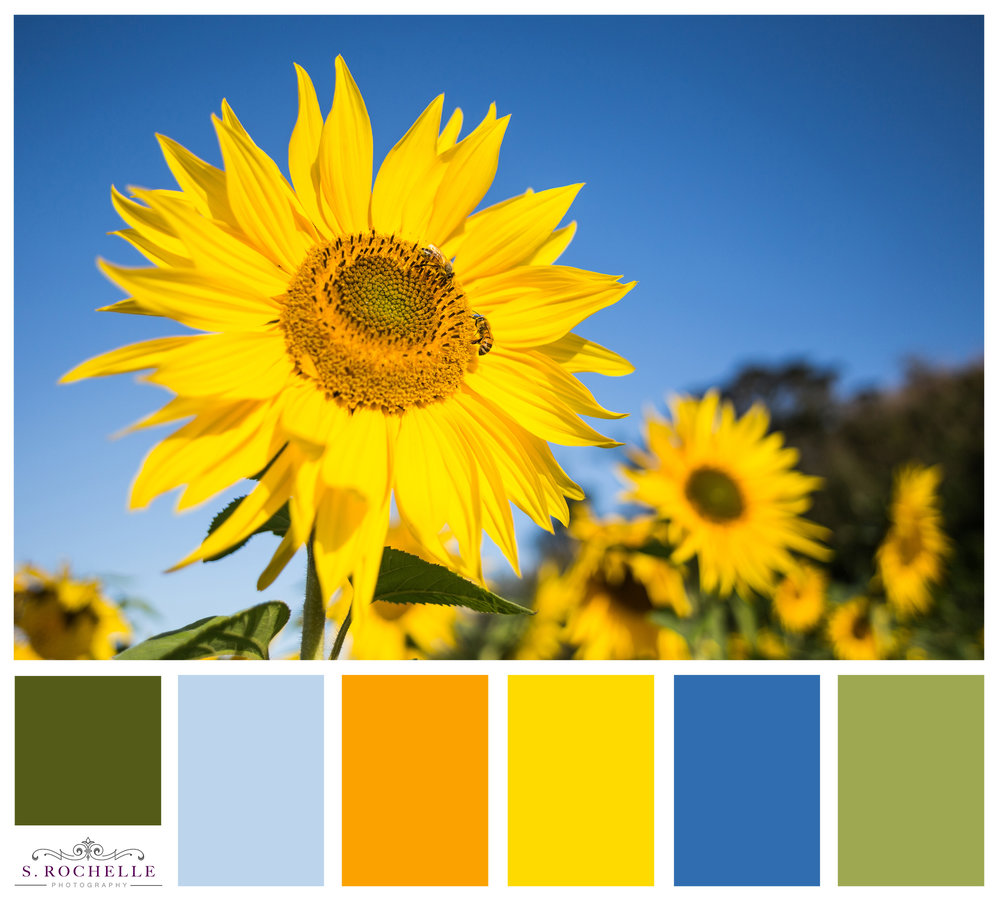 Sunflowers_S_Rochelle_Photography_IMG_5703_ColorPalatte.jpg