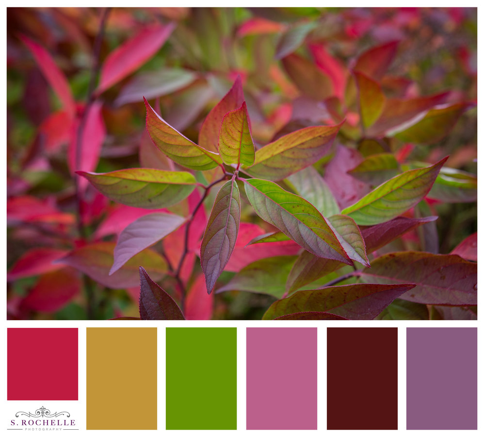 Turning Leaves_S_Rochelle_Photography_20171022_IMG_9986_ColorPalatte.jpg