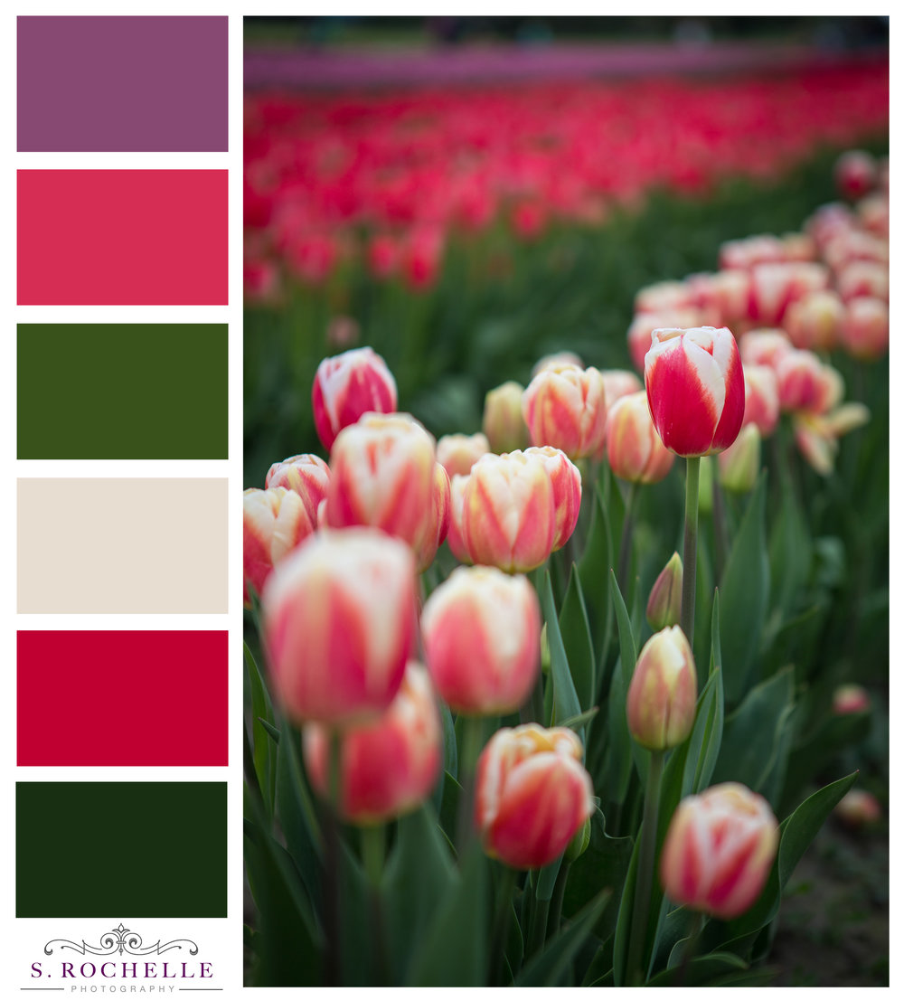 Tulip Field_S_Rochelle_Photography_20170422_IMG_9038_ColorPalatte.jpg