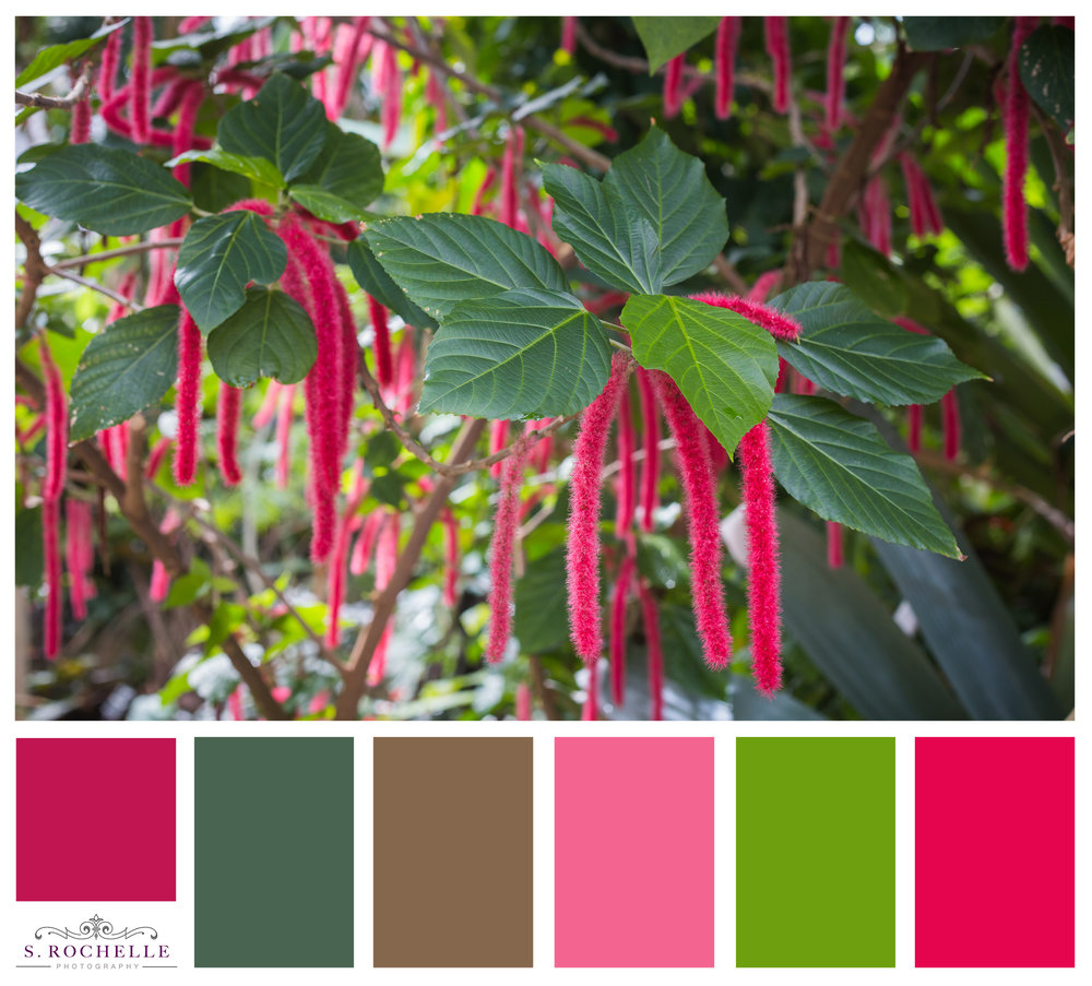 Chenille Plant_S_Rochelle_Photography_20160308_IMG_3552_ColorPalatte.jpg