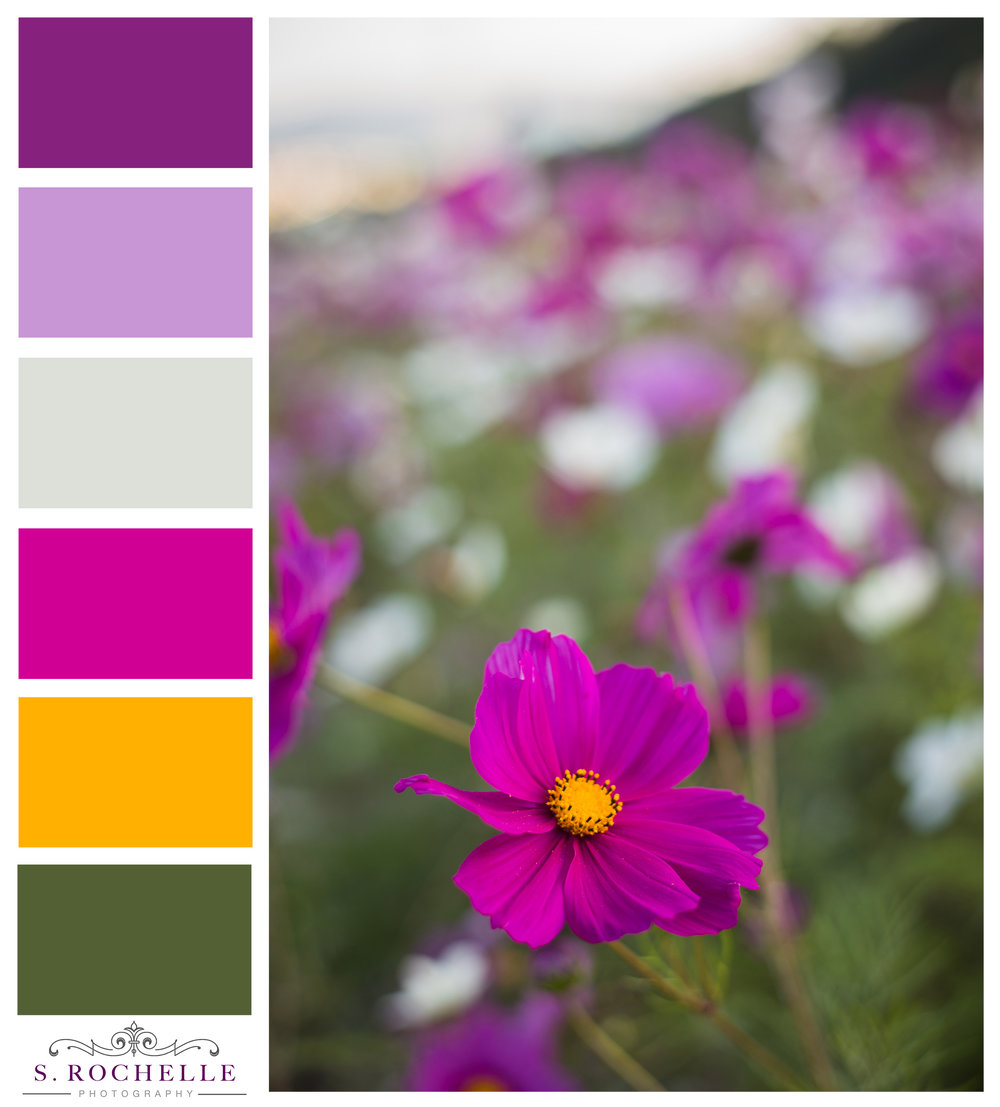 Cosmos_Okinawa_Japan_S_Rochelle_Photography_20140131_IMG_6219_ColorPalatte.jpg