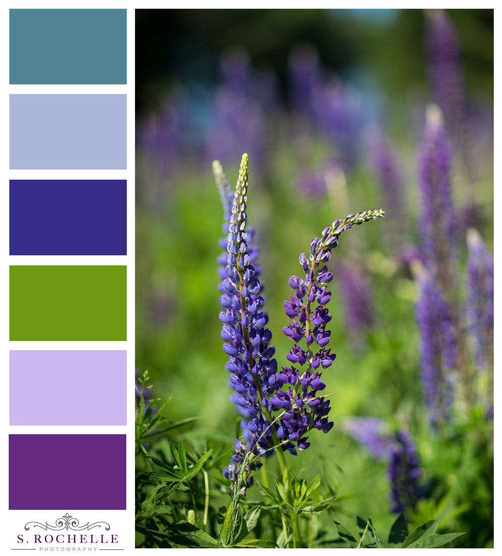 Lupins_S_Rochelle_Photography_20170529_IMG_2568_ColorPalatte.jpg
