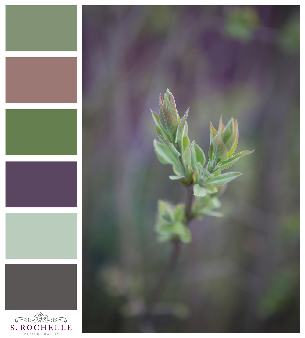 Budding_Leaves_S_Rochelle_Photography_20170327_IMG_6915_ColorPalette.jpg