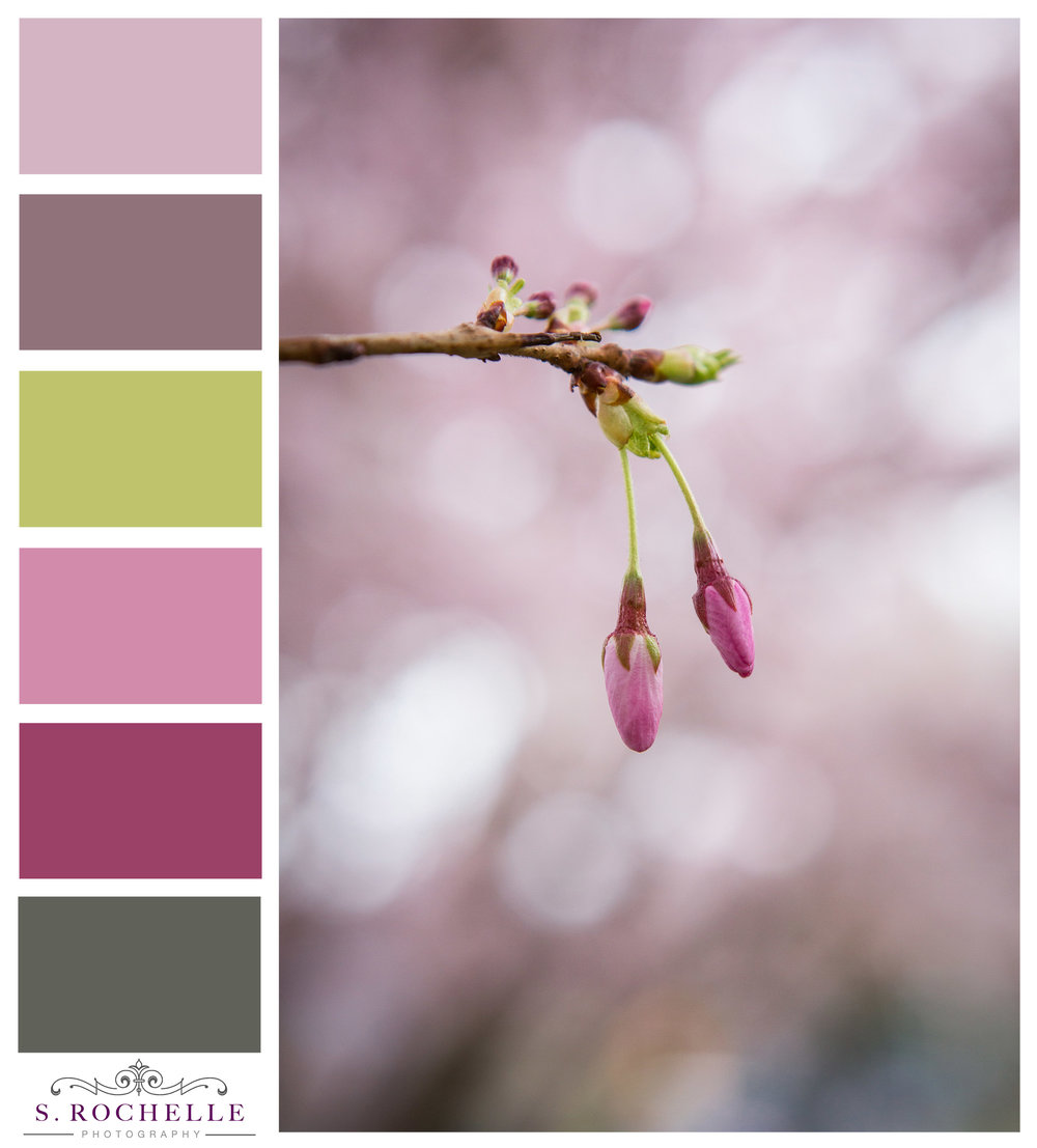 Cherry_Blossom_Buds_S_Rochelle_Photography_20180328_IMG_7706-Edit_ColorPalette.jpg