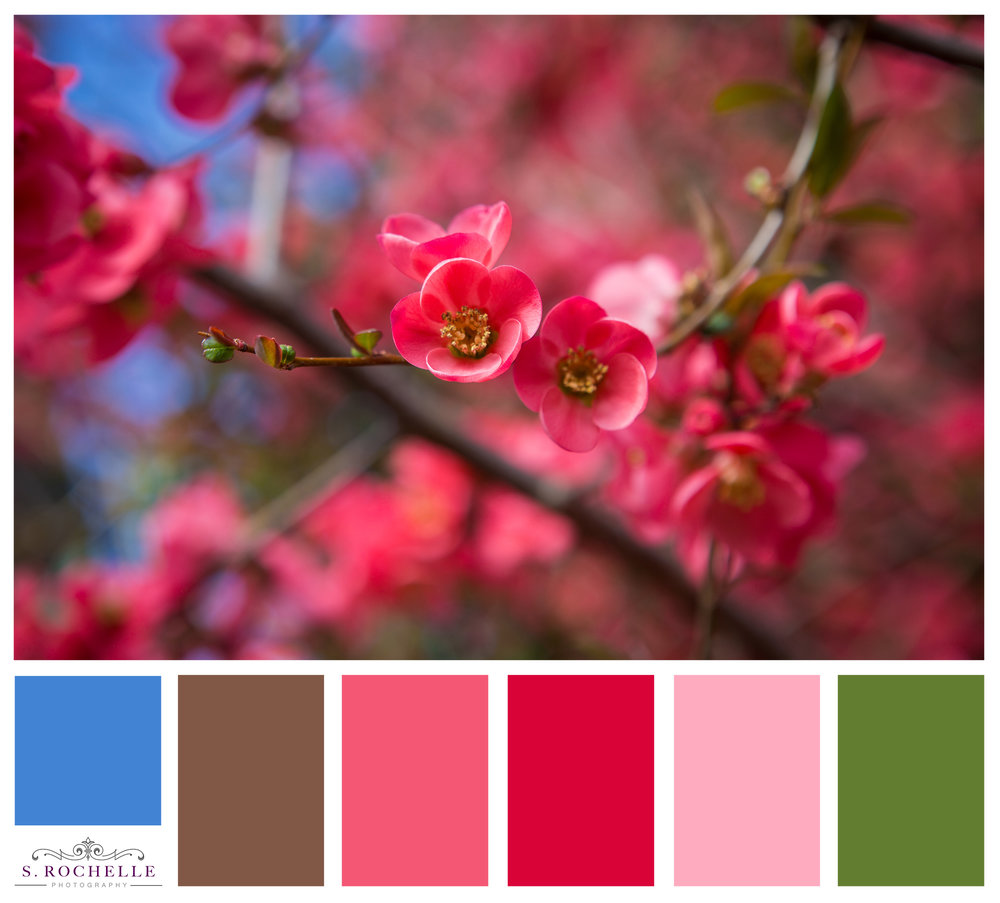 Flowering_Quince_S_Rochelle_Photography_20180317_IMG_6588_ColorPalette.jpg