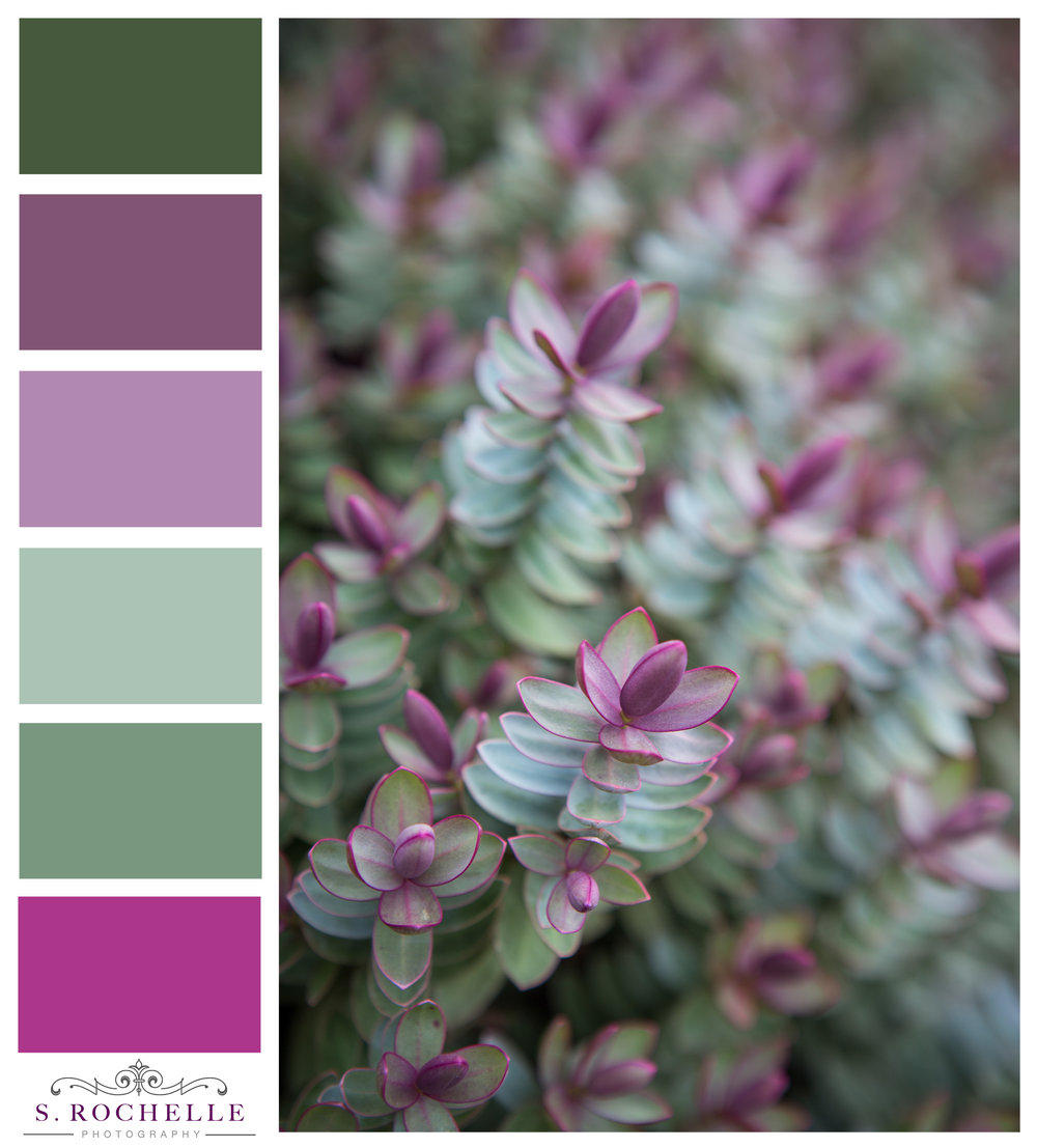 Silver_Dollar_Hebe_S_Rochelle_Photography_20180317_IMG_6773_ColorPalette.jpg