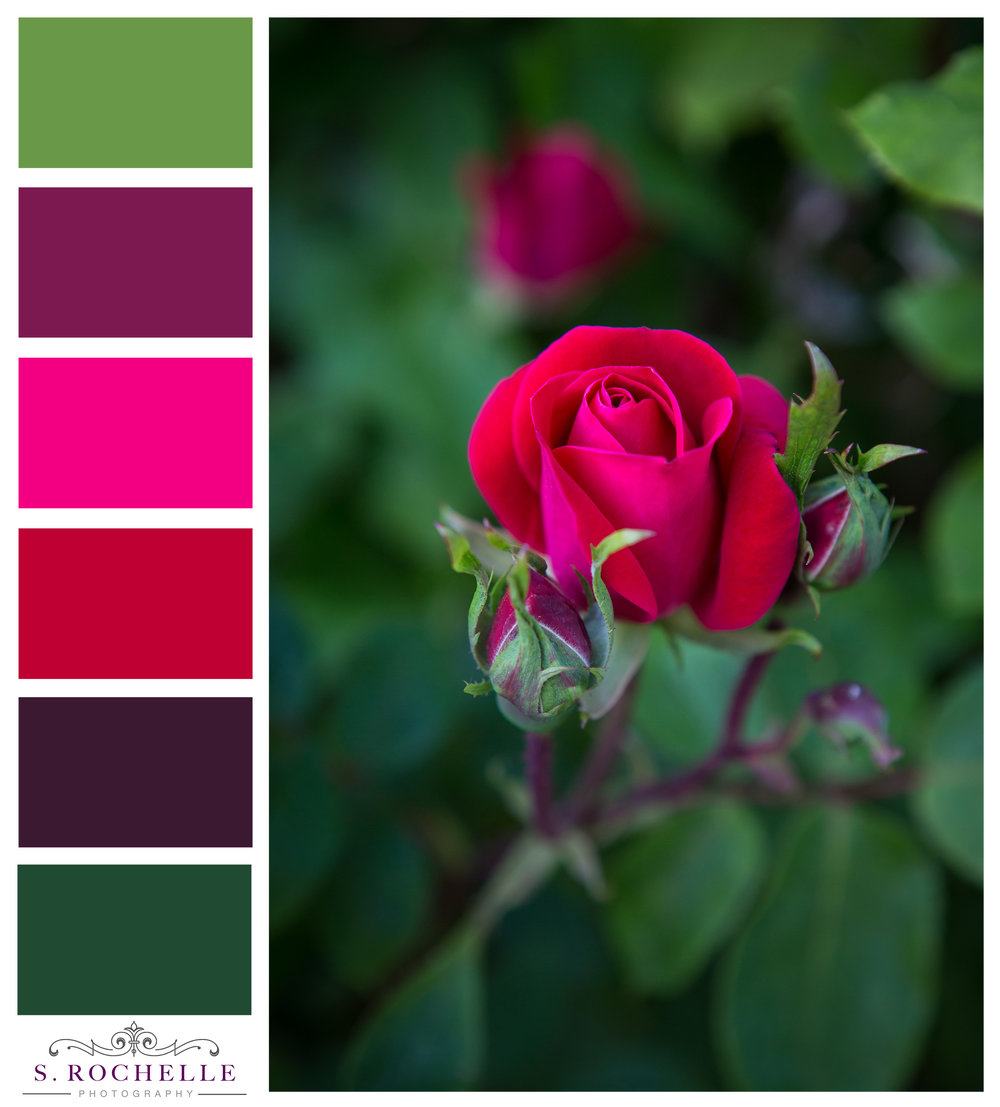Roses_S_Rochelle_Photography_20180515_IMG_7056_ColorPalette.jpg