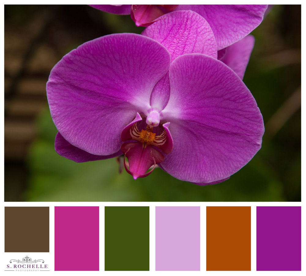 Fuchsia_Orchid_S_Rochelle_Photography_20130616IMG_0009_ColorPalette.jpg