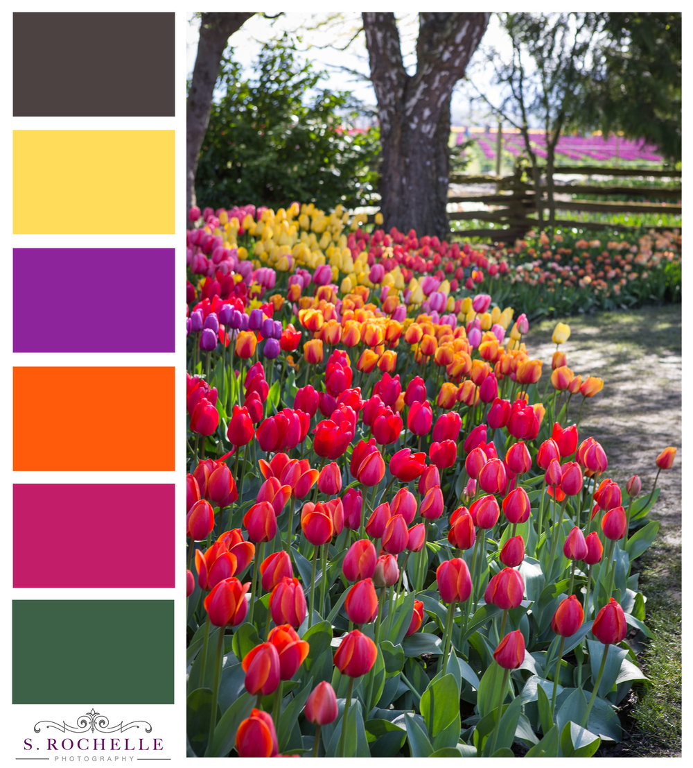 Tulips_Garden_S_Rochelle_Photography_20180422_IMG_9390_ColorPalette.jpg