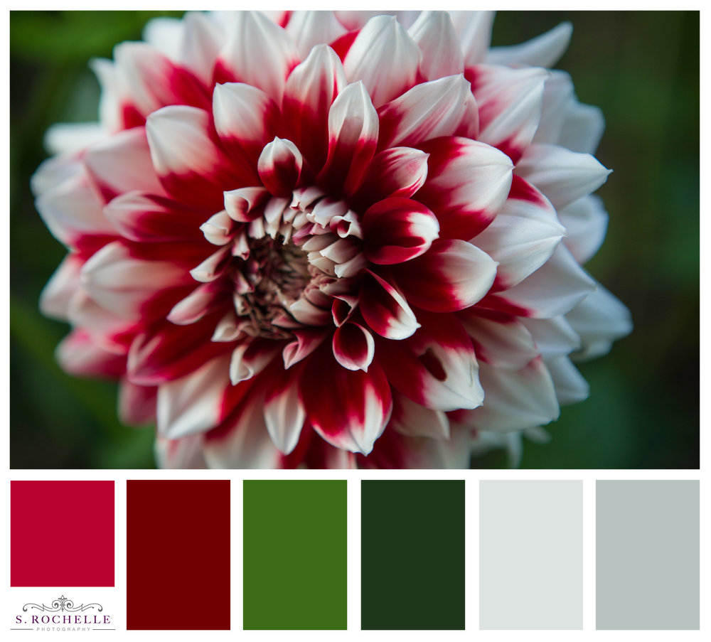 Red_White_Dahlia_S_Rochelle_Photography_20170902_IMG_9233_ColorPalette.jpg