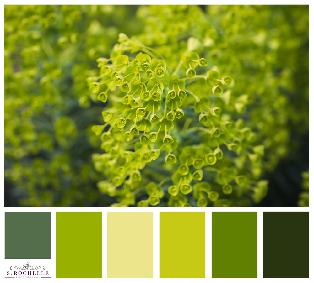 Euphorbia_S_Rochelle_Photography_20170325_IMG_6403_ColorPalette.jpg
