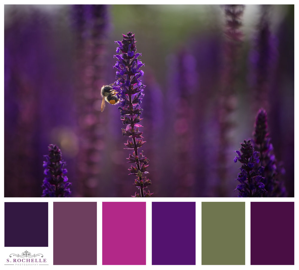Violet_Sage_S_Rochelle_Photography_20180618_IMG_9874_ColorPalette