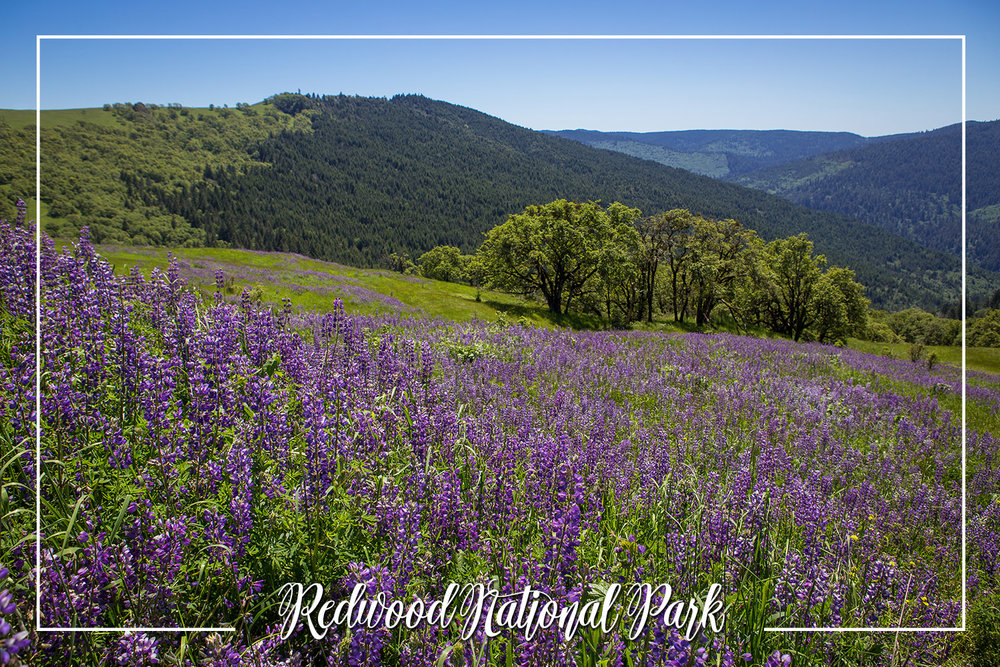 S Rochelle Photography Travel Tidbits Redwood National Park.jpg