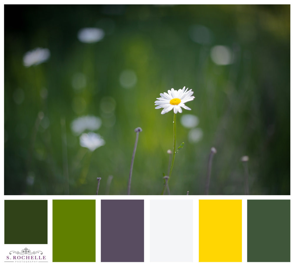 Daisy_S_Rochelle_Photography_20170529_IMG_2542_ColorPalette.jpg