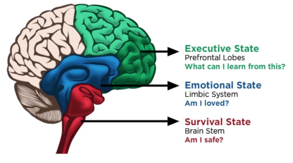 Neurodevelopmental Theory. Image from medium.com