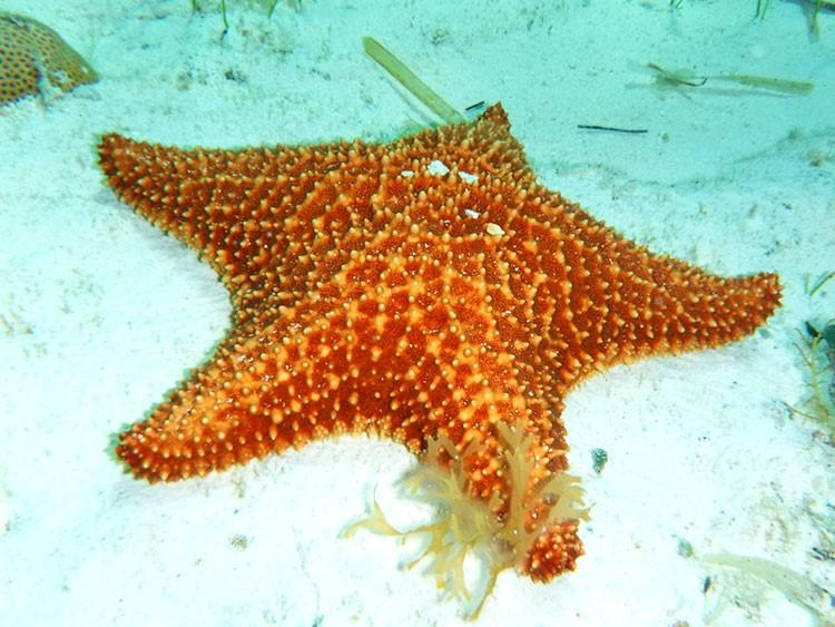 """Santuario de estrellas de mar """"El Cielo"""""""