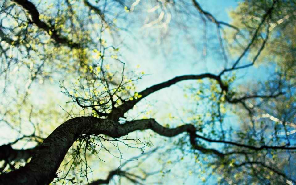 macro-spring-tree-960x600-wide-wallpapers.net