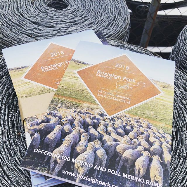 The countdown is on to our 2nd Annual On-Property Ram Sale Event next Monday 24th September to be held @ Willunga, Wellington NSW. In the meantime, feel free to take a virtual walk through the sale catalogue by visiting our website and clicking 'On Property Sale' www.boxleighpark.com We look forward to welcoming you through the farm gates again next Monday from 10am. Bubbles, Beer and Boxleigh Park Lamb rolls will once again be flowing freely. #ramsale #catalogue #asbv #merino #rams