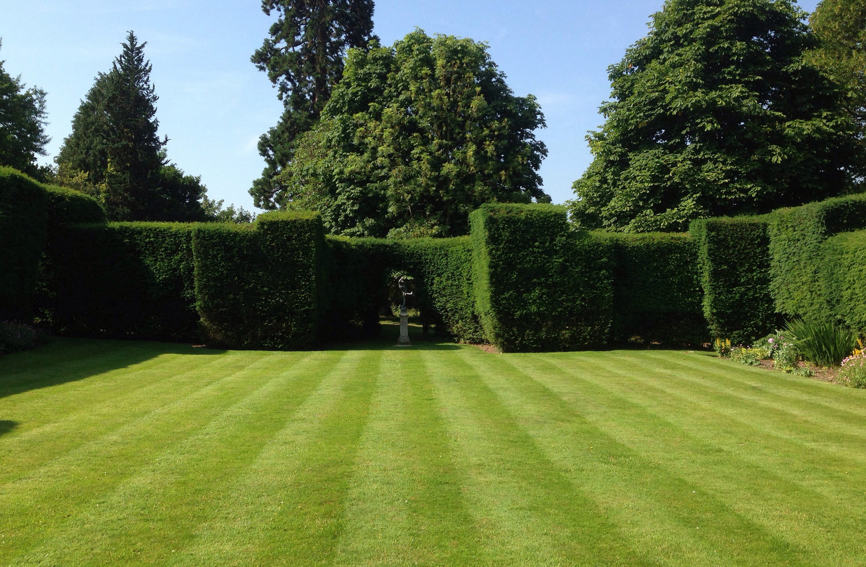 infinity garden maintenance - Garden Mainenance