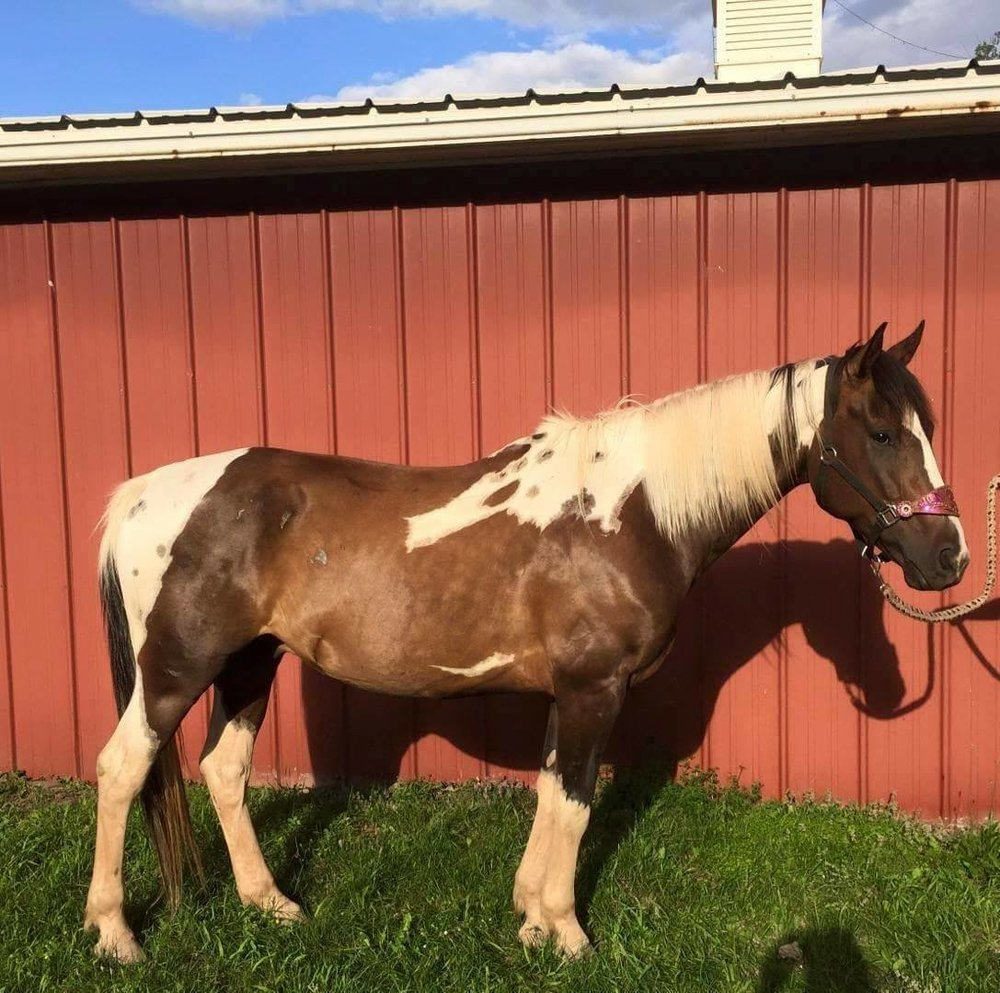 """spoonful 'o spots"" aka ""sonic"" consignment horse"