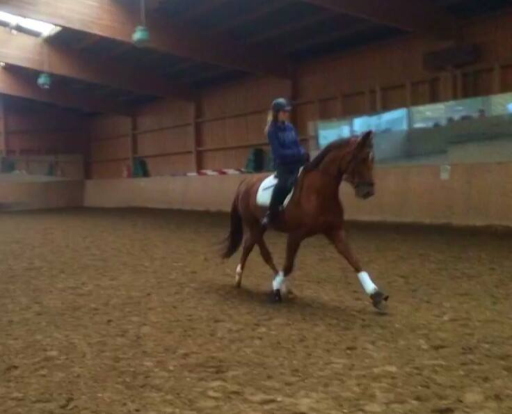 dressage training in germany