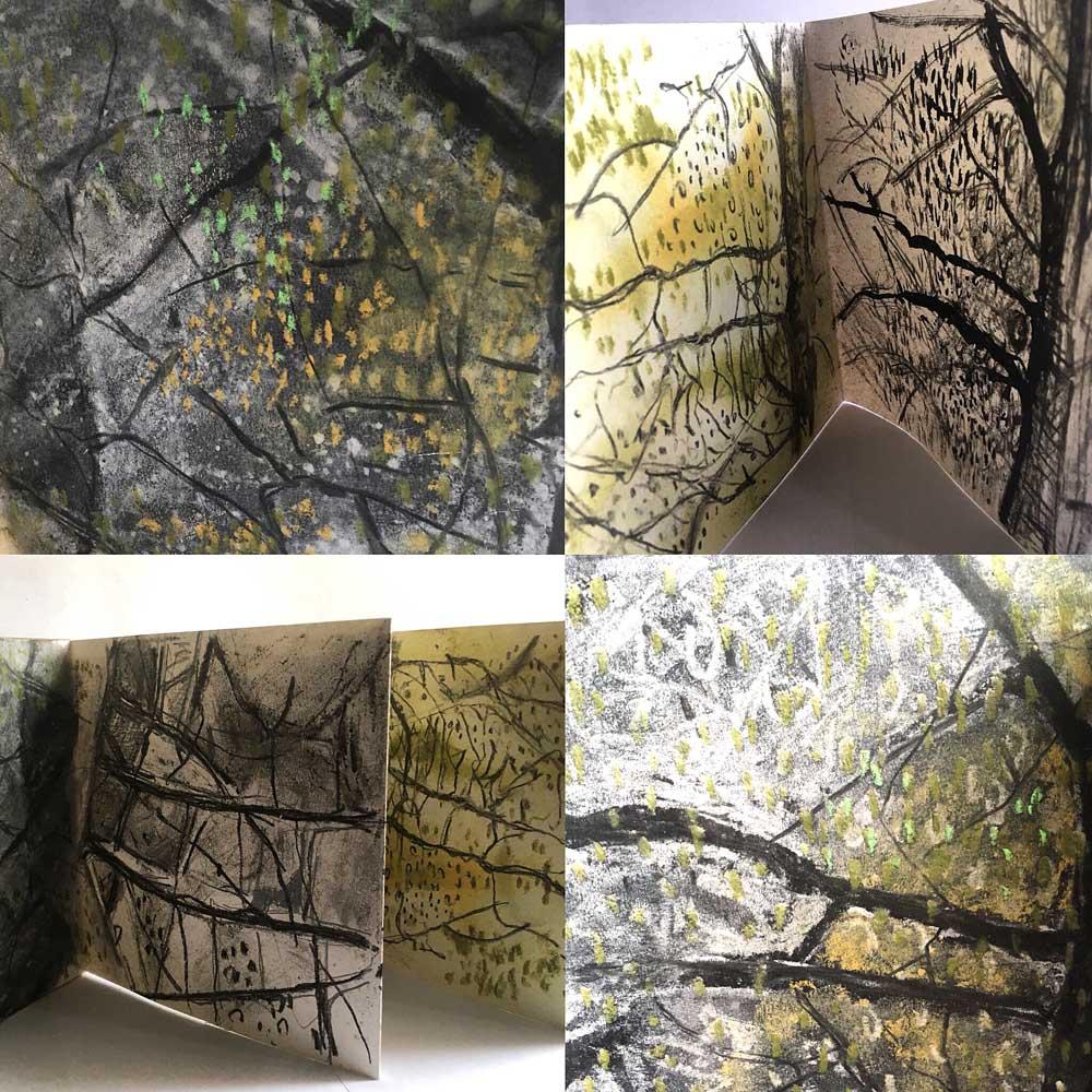 Silver Birch Studies
